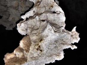 Maya Legends Come to Life: Alux & Tzucan