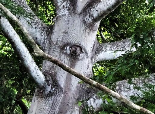 Xtabay: The Goddess & A Mystery Tree