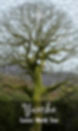 yaxche sacred ceiba tree oracle card