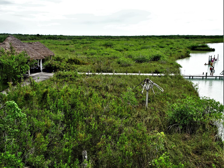 kaan luum mangrove