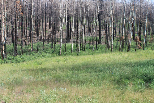 The Best of Colorado - 2 Acres in Forbes