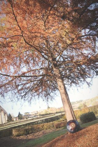 Tree ostara