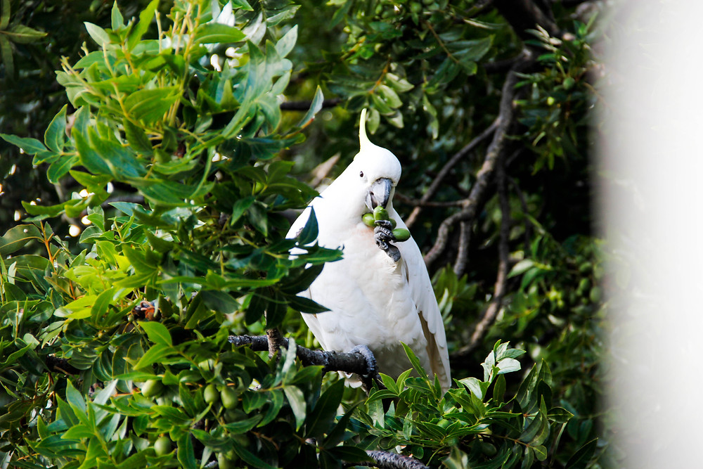 Aç+Büyük+Beyaz+Kuş.jpg