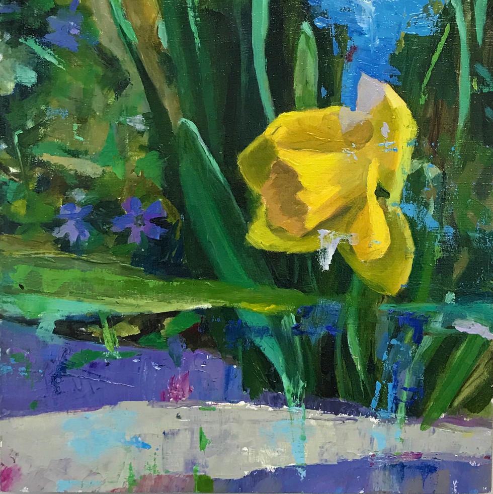 [ Yellow Daffodil ]
