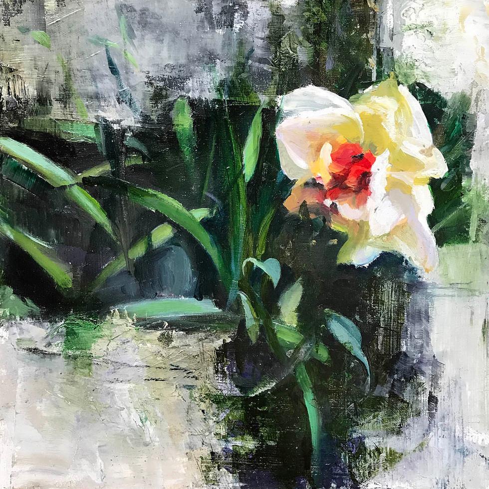 [ Daffodil ]
