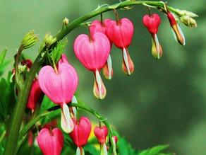 Less SHAME More LOVE -♥- Juicy Heart