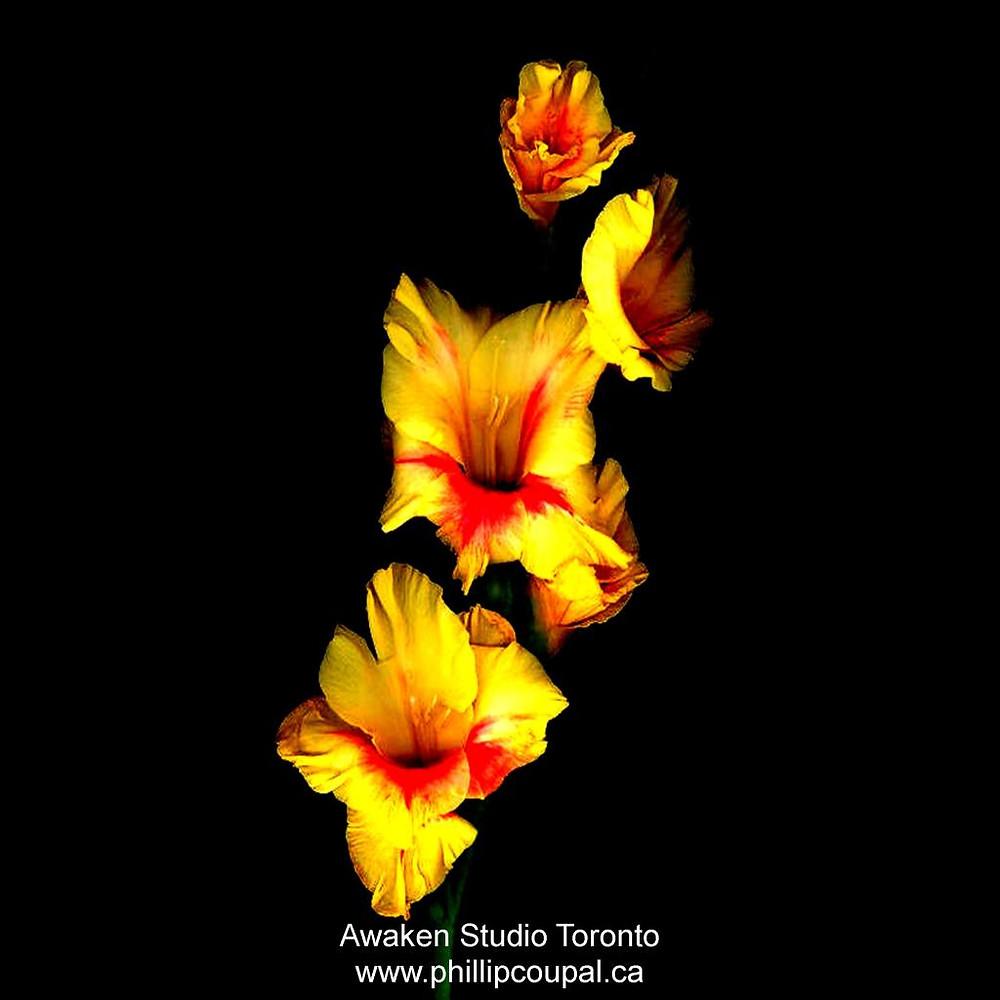 Gratitude Day 71 at the Awaken Studio Toronto http://www.awakenstudiotoronto.com