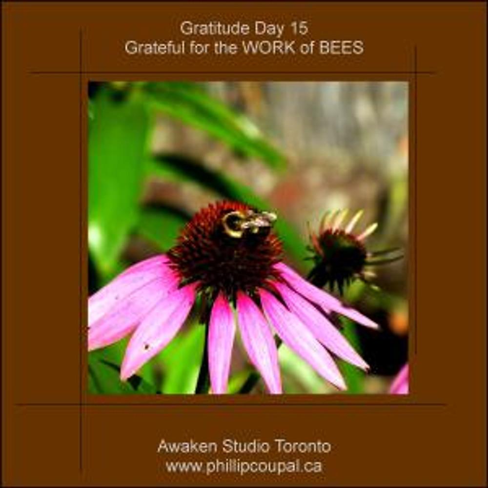 Days of Gratitude at the Awaken Studio Toronto http://www.awakenstudiotoronto.com