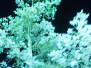 Loving TREES -♥- Juicy Heart