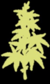 cbd-leaves.png