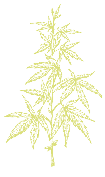 cbd-leaves.png