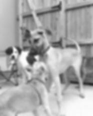 dogs5-e1343792970641.jpg