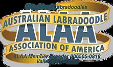 Elite Blend Labradoodles ALAA Internatio