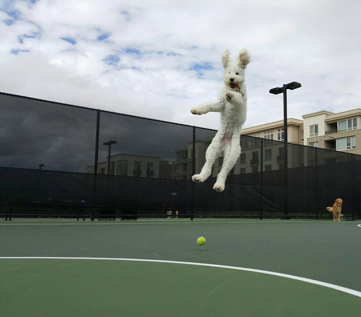 luna jumping (1).jpeg