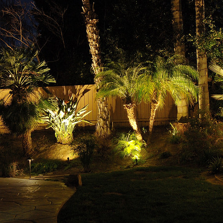 Rear Yard Palm Tree landscape Lights