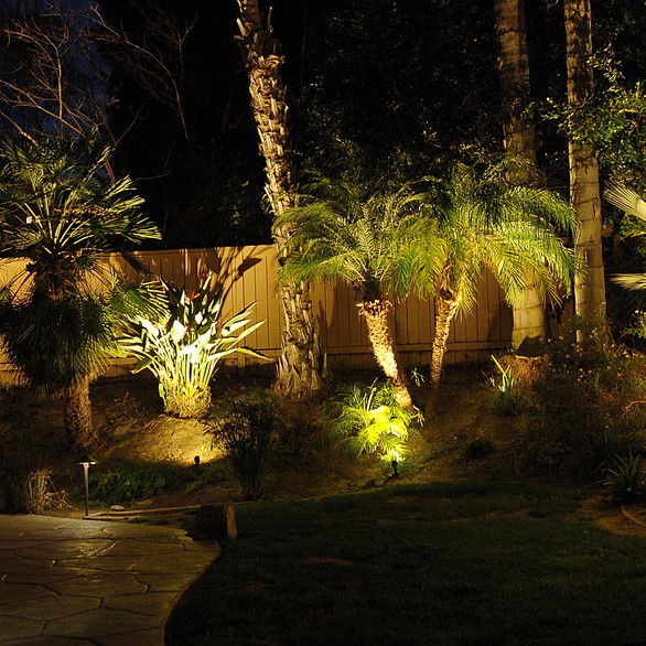 Rear Yard Palm Tree landscape Lights