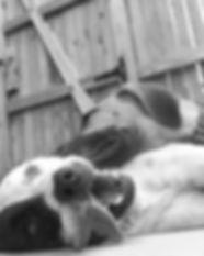 dogs4-e1343792950416.jpg