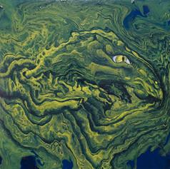 Grüner Drache (Nr. 11)