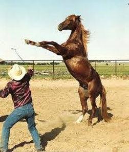 crazy horse 1.jpg