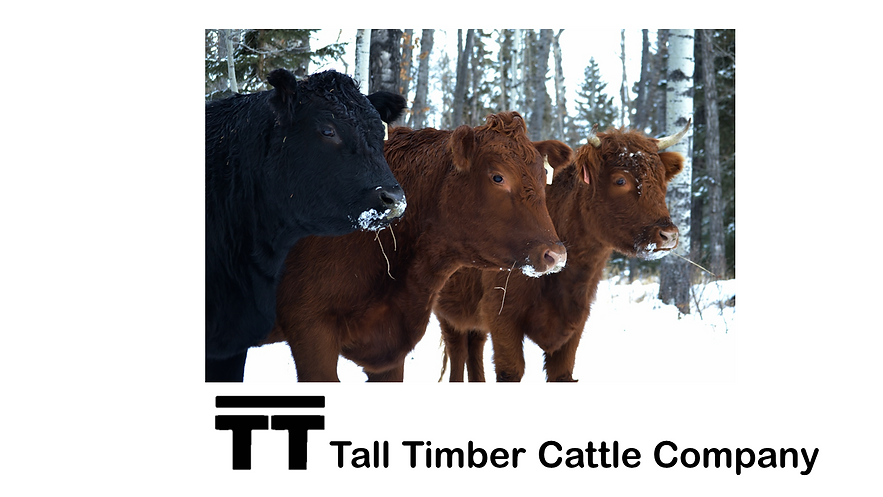 Tall Timber Cattle Co.png