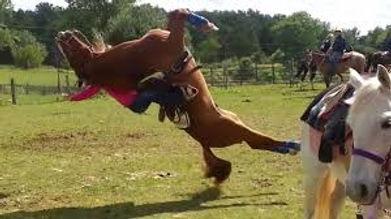 crazy horse 2.jpg