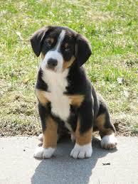 Entle Pup