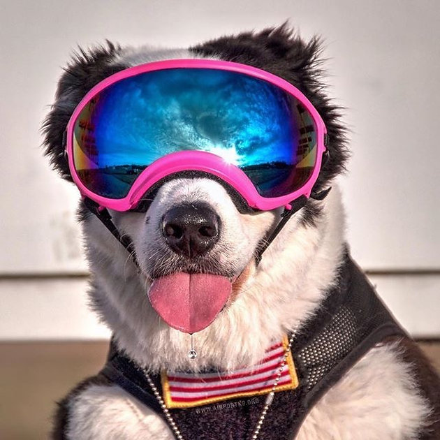 These goggles are more stable in the face, while allowing for full jaw  motion. Good option for working and highly active dogs.