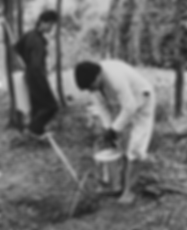 Evil men pouring diesel into badger sett