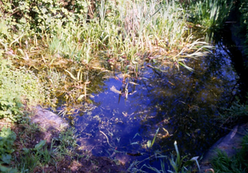 the pond at binfield badgers site