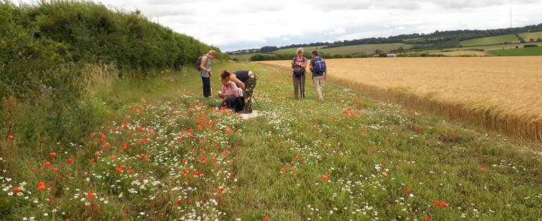 Surveyors wildflowers.jpg