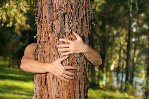 treehugger_nbxphw.jpg