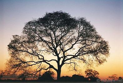 TreeSunset.jpg