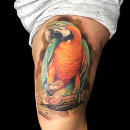 Chris_Hautundliebe_Tattoo_Papagei.jpg