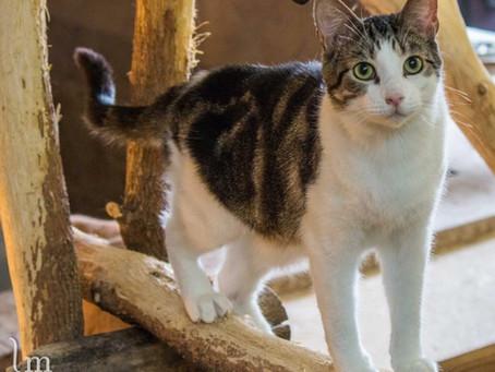 Diarrhée du chat : causes et solutions