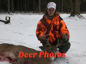 Deer Photos