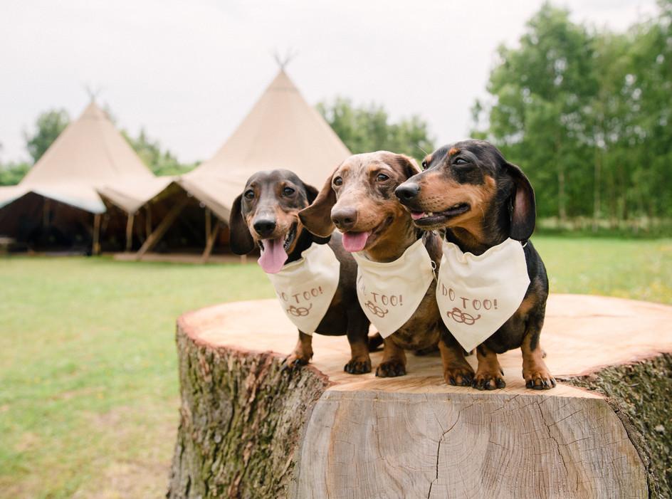 Wellington Wood Wedding Venue.jpg