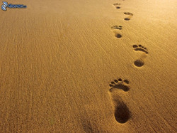 footprints-in-the-sand-163312