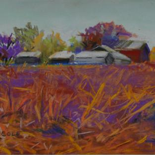 Barns Amid the Cornfields