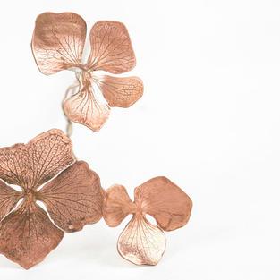 Copper Hydrangea