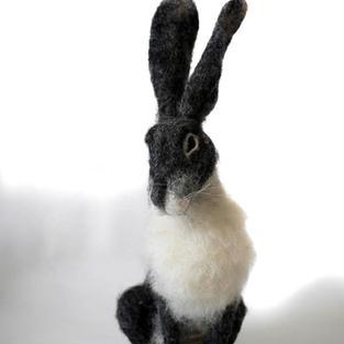 Grey Hare 2