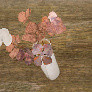 Hydrangea Cluster in Porcelain Vessel