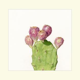 House Plant-Prickly Pea