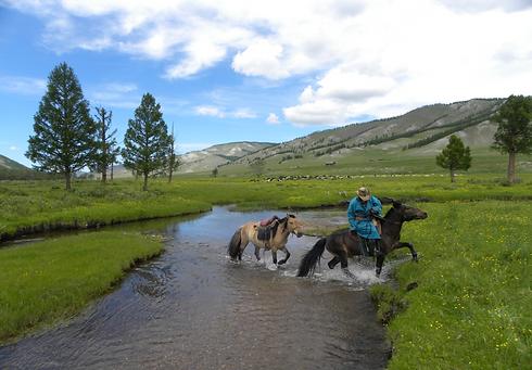 Mongol horses.png