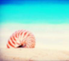 nautilus on the beach