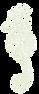 seahorse-png-24562_edited_edited_edited.