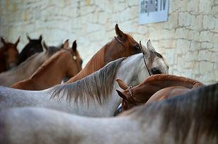 Horse line up.jpg