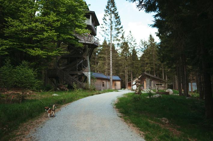 Herznstage Selbstliebe-Retreat Oberösterreich Mühlviertel Böhmerwald Ramenai Selbstliebe Workshop Achtsamkeits-Retreat Yoga-Retreat herznsgschichtn