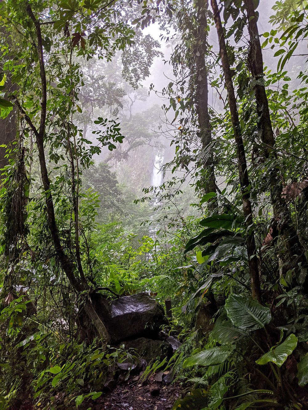 La Fortuna Waterfall Rainforest Trail on a foggy morning