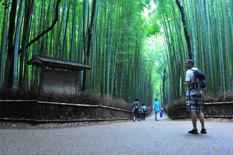 Path of Bamboo in Sagano, Kyoto