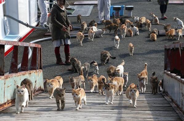 Ehime: Cats Island, Aoshima